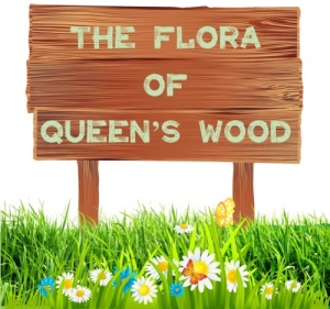 The Flora of Queens Wood Report